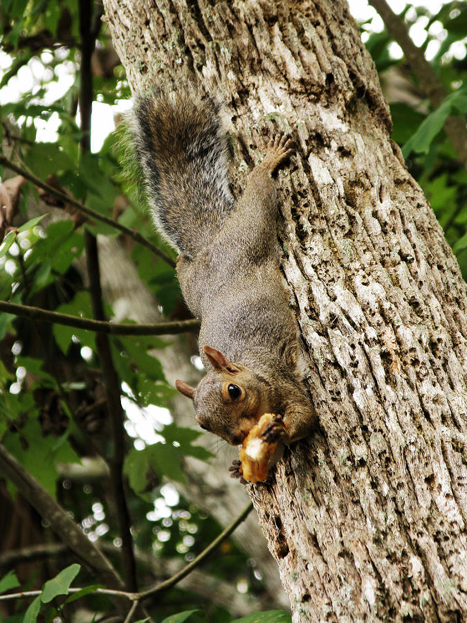 Squirrel Photograph - Lunch Time by Randi Kuhne
