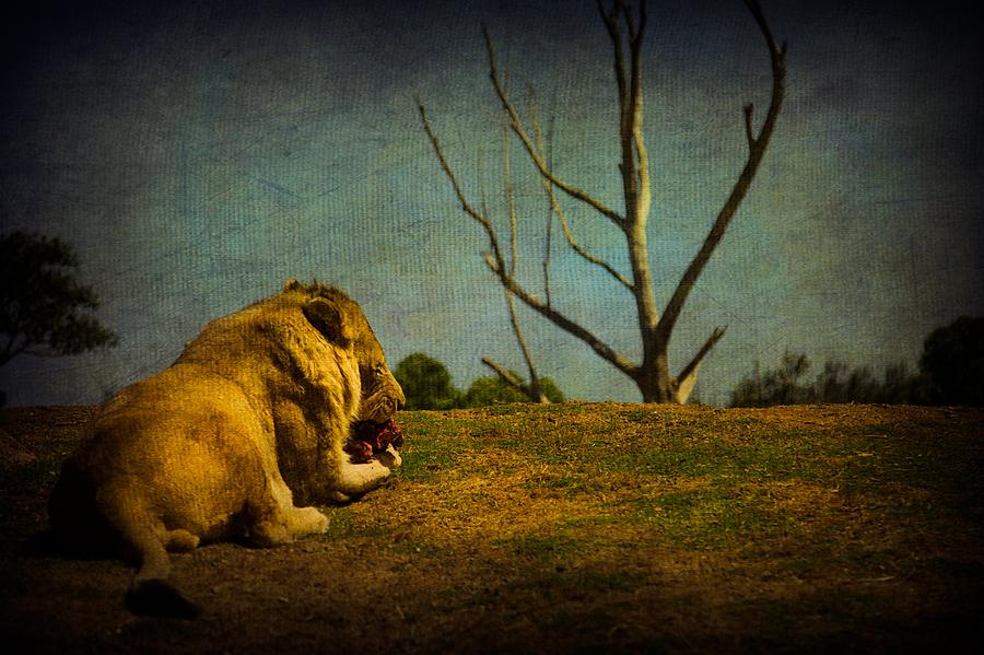 Zoo Photograph - Lunch Time by Shari Mattox