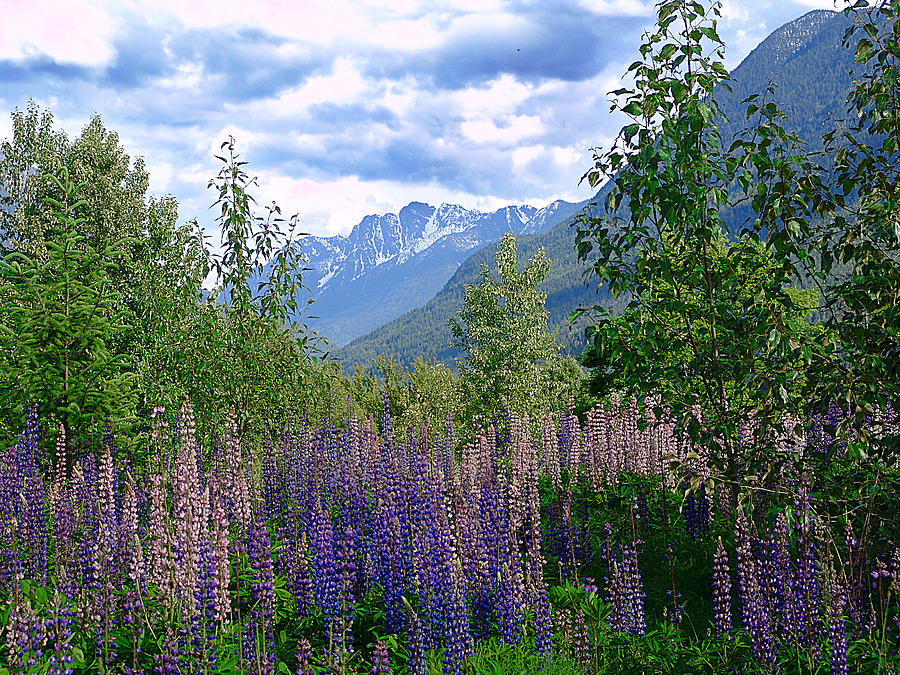 Lupines Mixed Media - Lupines And Mountains by Janet Ashworth