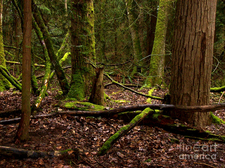 Forest Photograph - Lush Green Forest by Mary Mikawoz