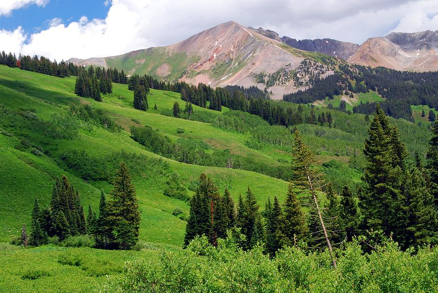 Lush Green Of A Colorado Summer Painting