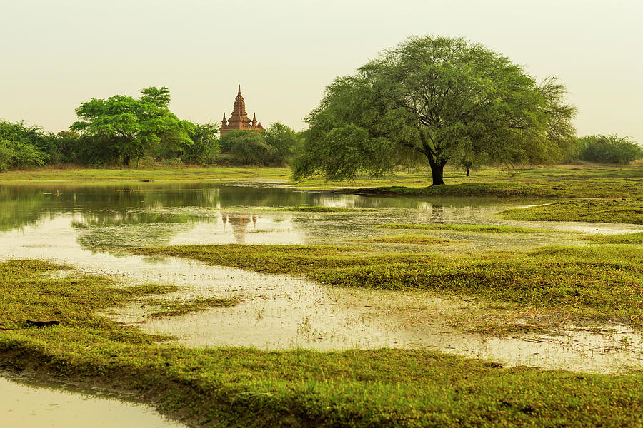 Lush Landscape With Wide Tree And Temple Photograph by Merten Snijders