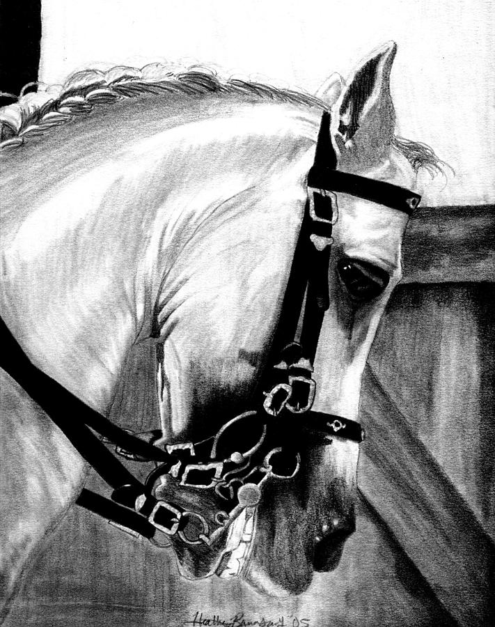 Lusitano Horse Portrait Drawing by Olde Time  Mercantile