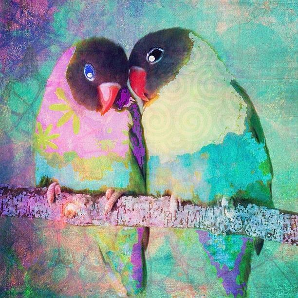 Collage Photograph - Luvbirds...a #digitalcollage #birdart by Robin Mead