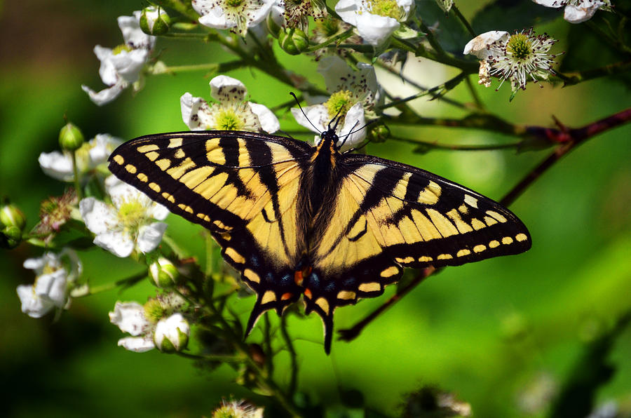 Butterfly Photograph - Lwv50054 by Lee Wolf Winter