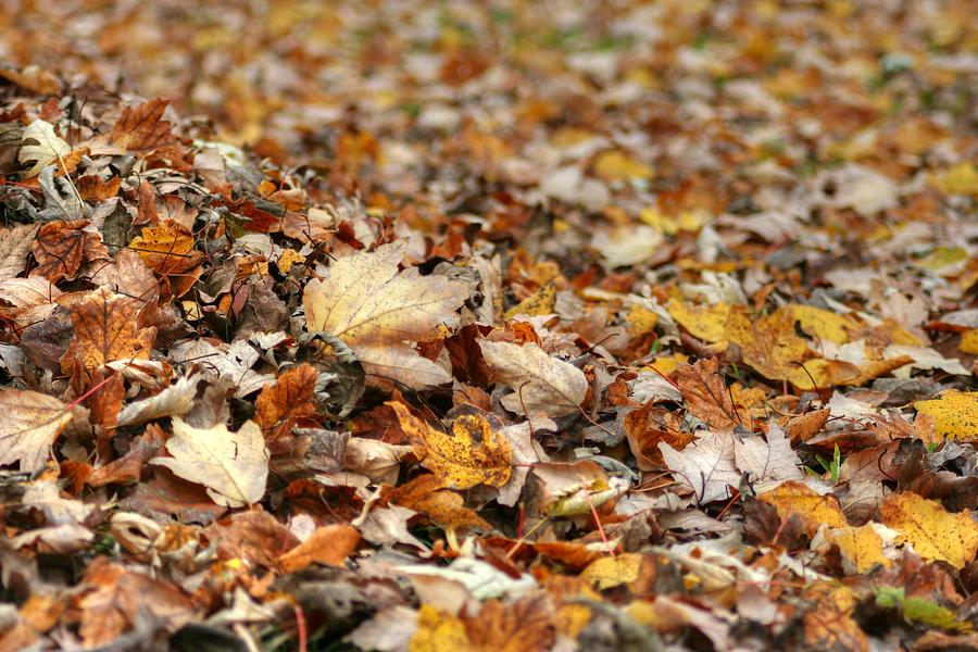 Foliage Photograph - Lying On The Ground by Ester  Rogers