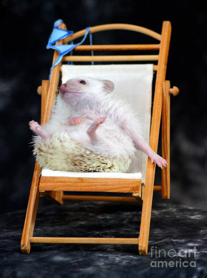 Humor Photograph - Lyla Sunbathing by Paul  Wilford