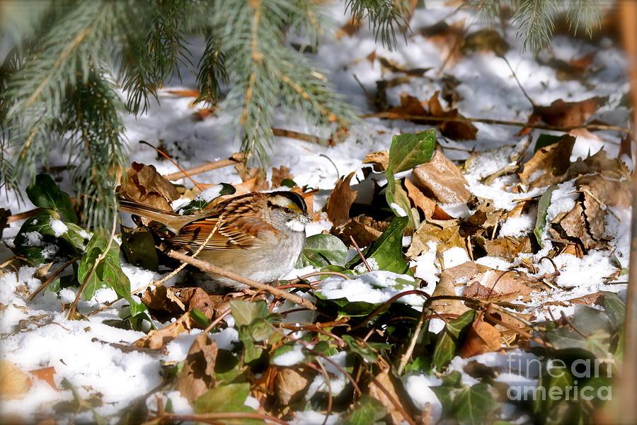 Birds Photograph - Lynne by Jay Nodianos