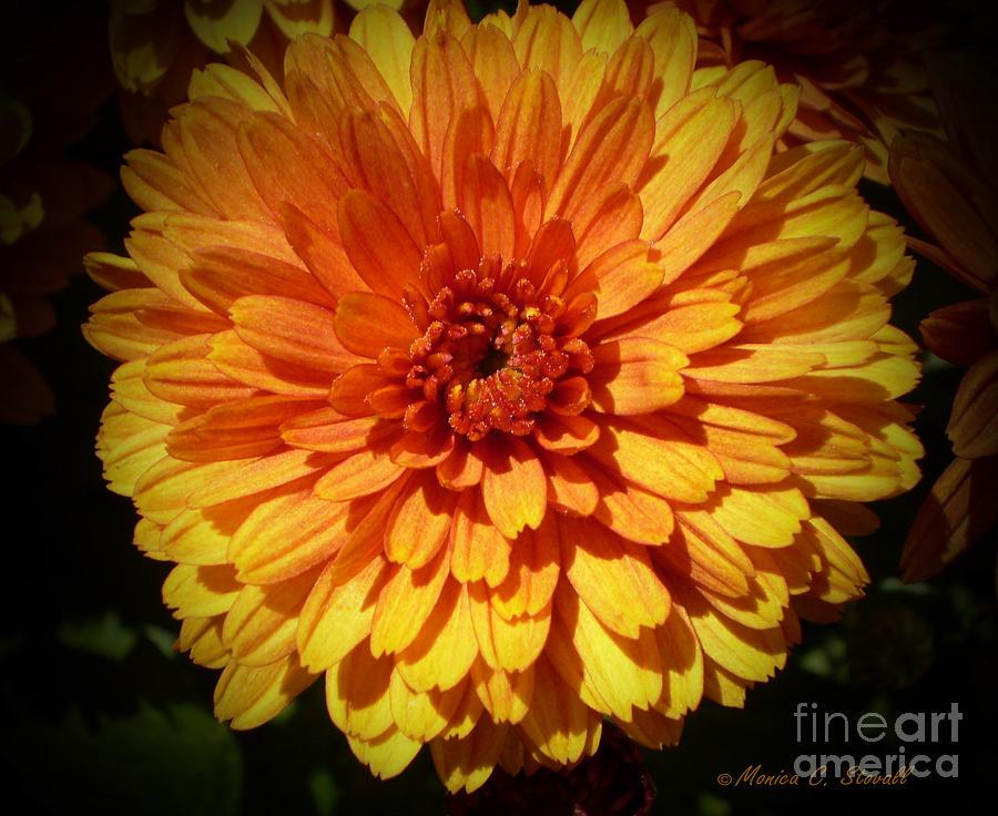 Bright Orange With Deep Reddish Orange Center Flower Photograph - M Bright Orange Flowers Collection No. Bof8 by Monica C Stovall