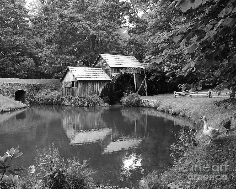 Mabry Mill Photograph - Mabry Mill by Mel Steinhauer
