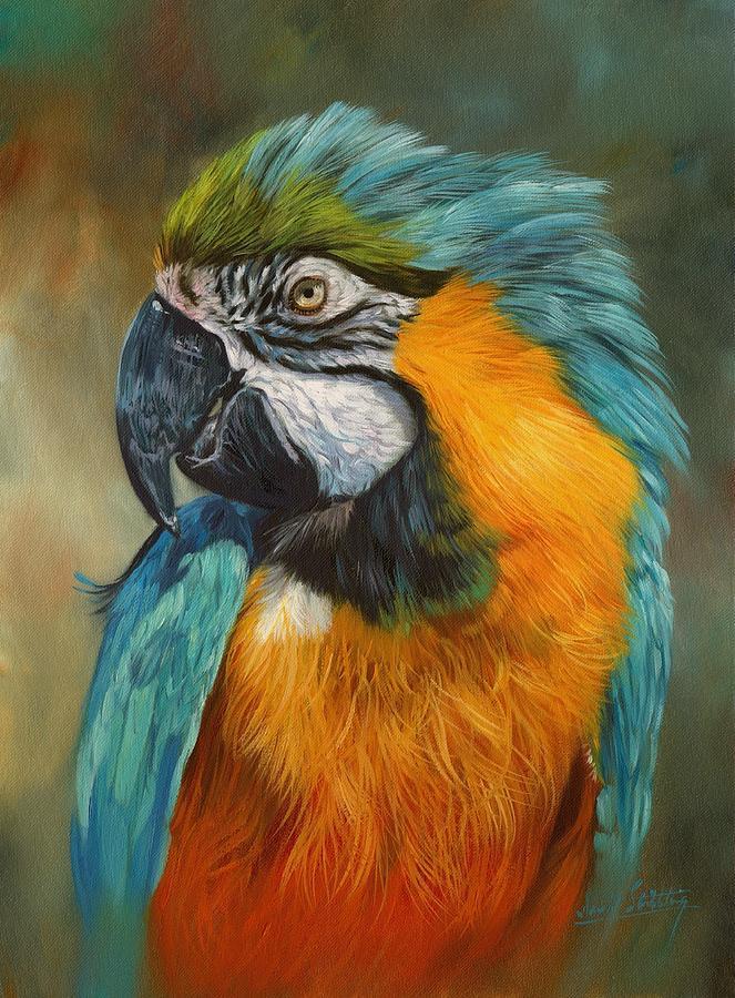 Parrot Oil Paintings