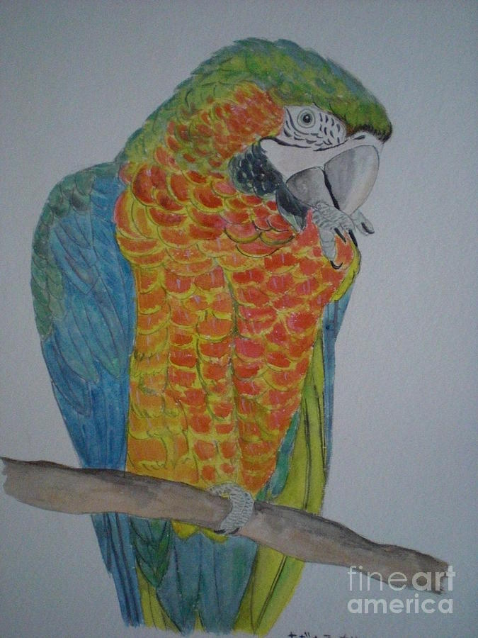 Parrots Painting - Macaw Parrot Painting by Nami ODonnell