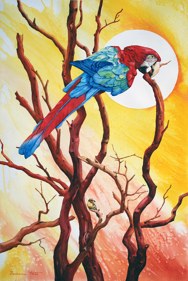 Watercolor Painting - Macaw by Zuzana Vass