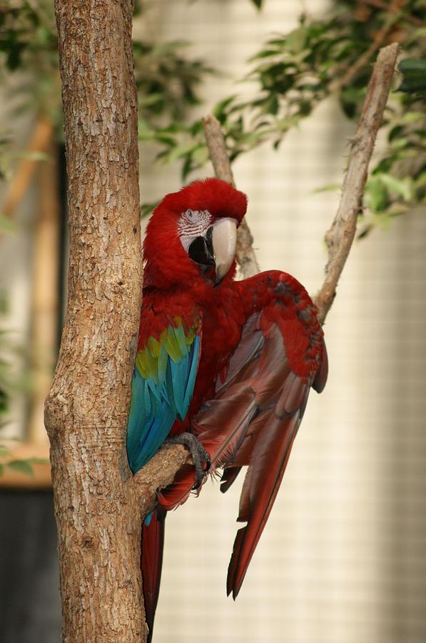 Bird Photograph - Maccraw  by Heidi Poulin