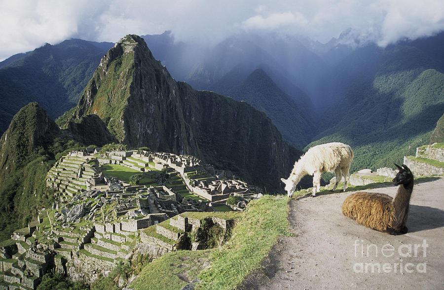Machu Picchu Photograph - Machu Picchu And Llamas by James Brunker