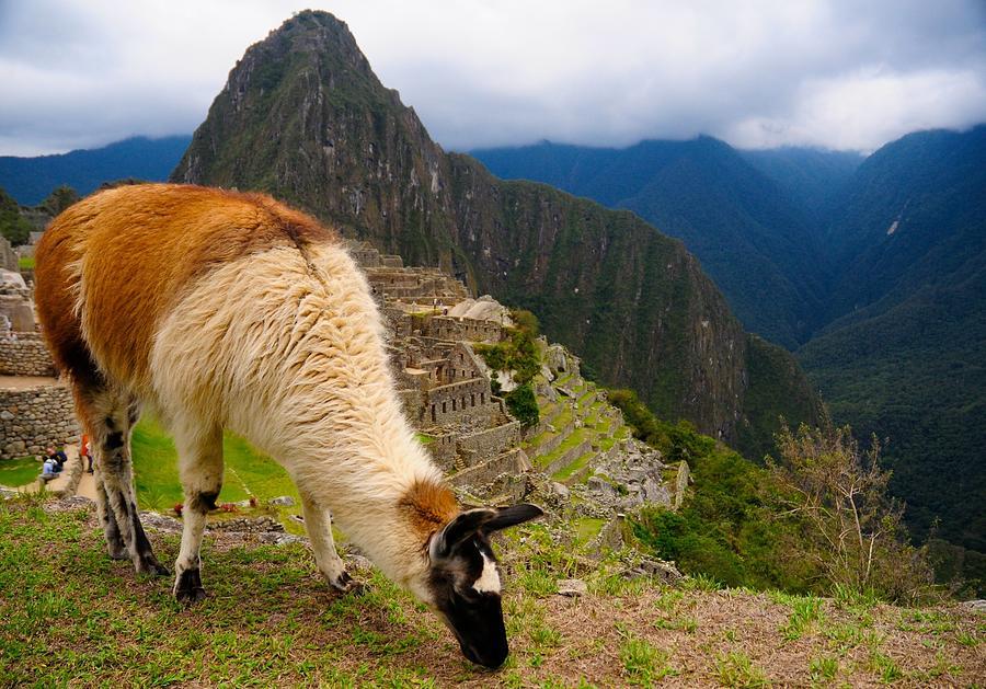 Alpaca Photograph - Machu Picchu Peru by Max Ratchkauskas
