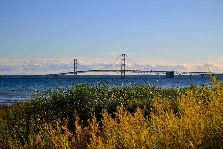 Mackinac Bridge And Golden Grass Photograph