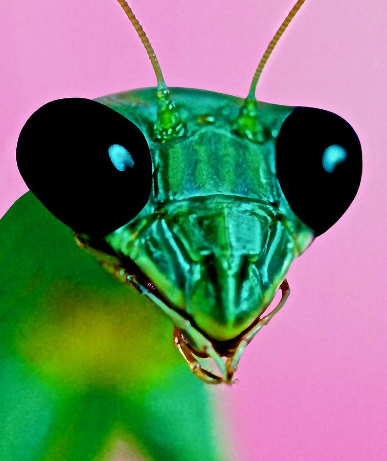 Mantis Photograph - Macro Closeup Of The Praying Mantis by Leslie Crotty
