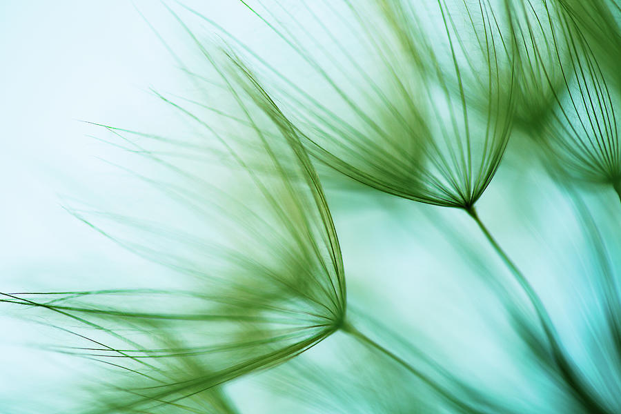 Macro Dandelion Seed Photograph by Jasmina007