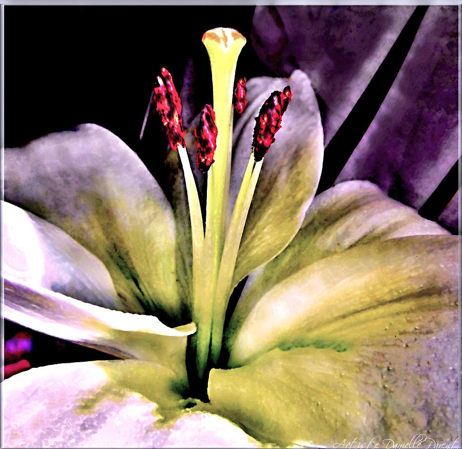 Closeups Photograph - Macro Luminous Lily  by Danielle  Parent