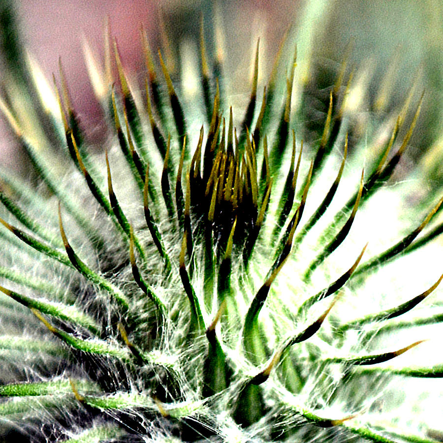 Beautiful Photograph - Macro Thistle  by J Roustie