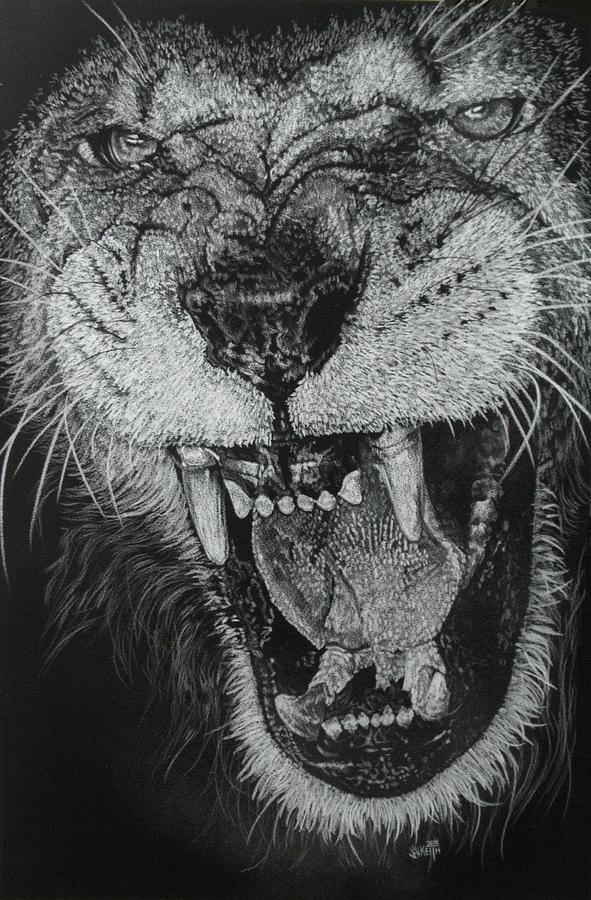 Lion Drawing - Madness by Barbara Keith