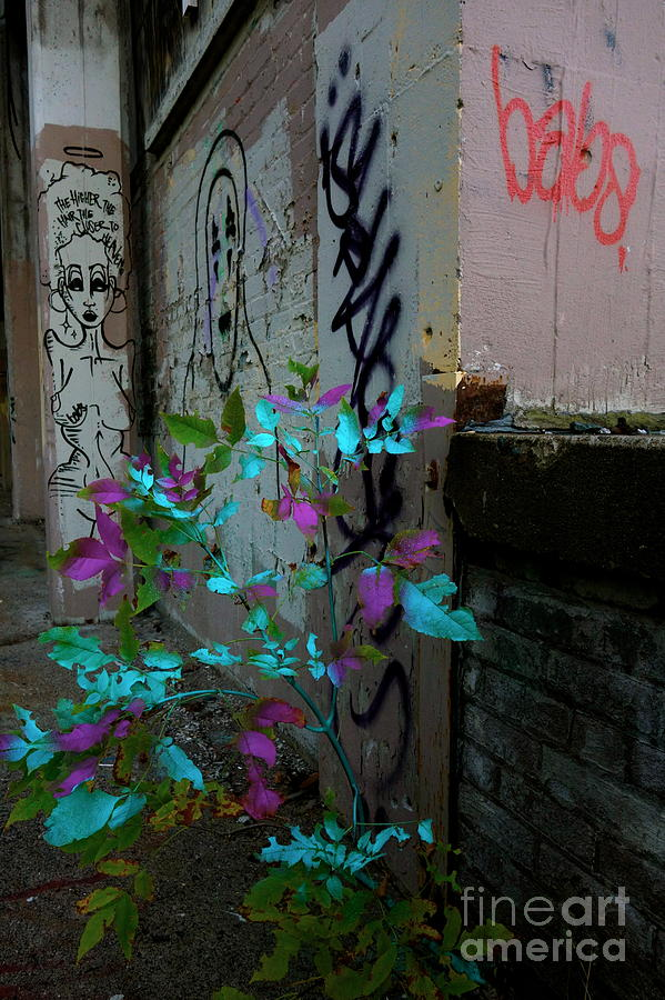 Spray Paint Photograph - Magenta Cyan And Babs by Jacqueline Athmann
