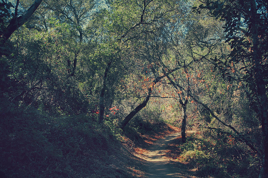 Thornewood Open Space Preserve Photograph - Magic Awaits Us by Laurie Search