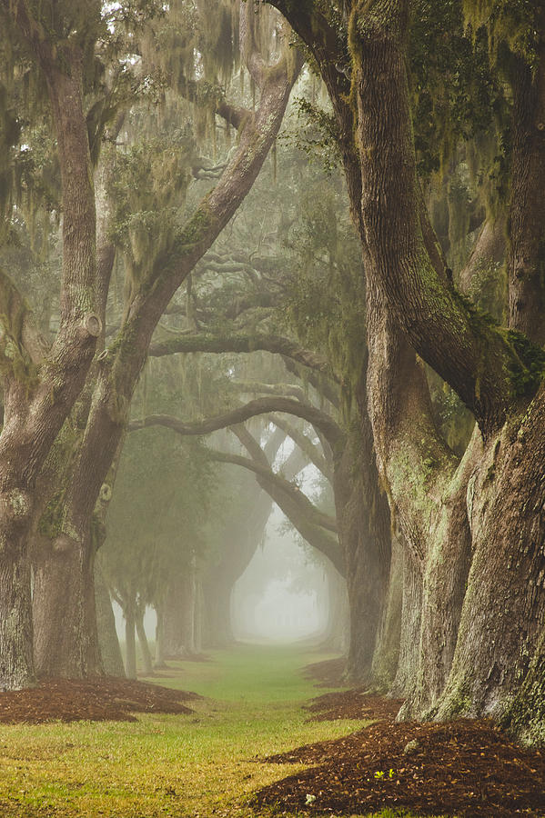 Avenue Of Oaks Photograph - Magic Forest by Barbara Northrup