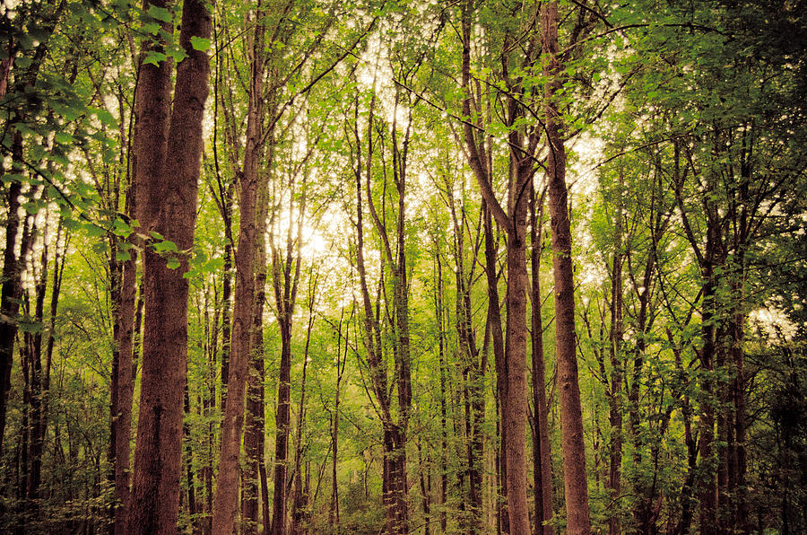 Forest Photograph - Magic Forest by Cara Moulds