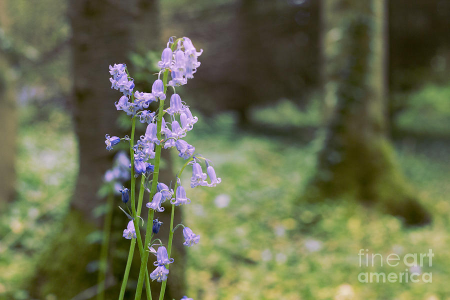Forest Photograph - Magic Forest by Jevgenija Kokoreva