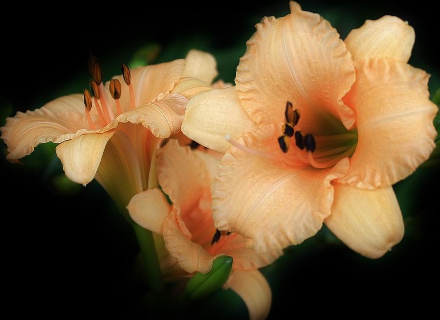 Flora Photograph - Magic Glow by Bruce Bley