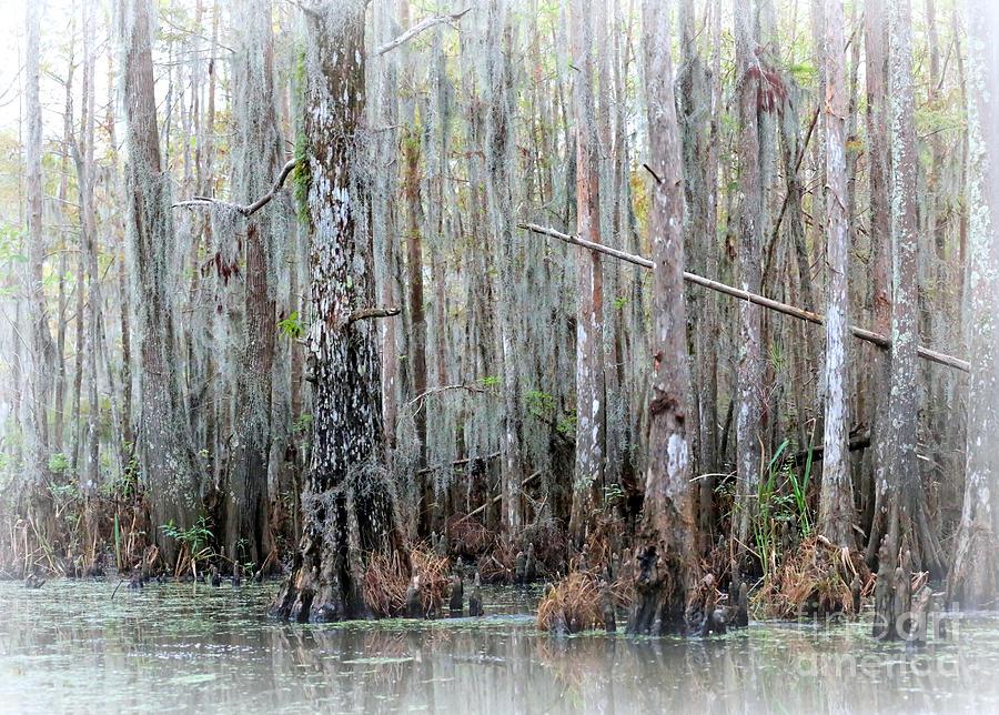 Louisiana Photograph - Magical Bayou by Carol Groenen
