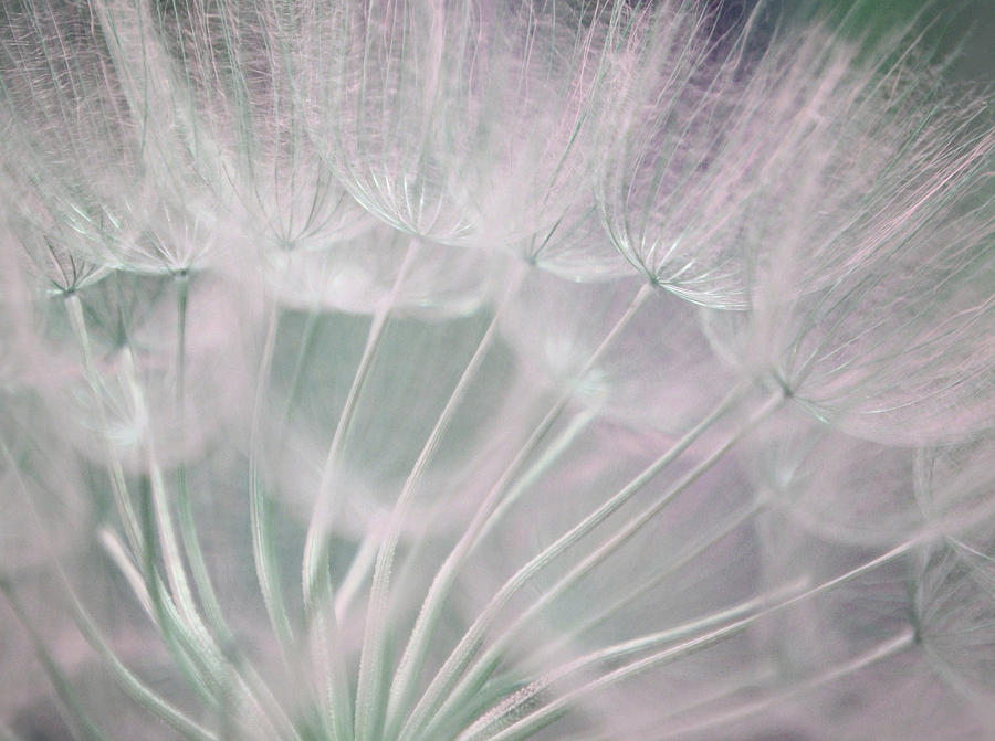 Magical Beauty Photograph