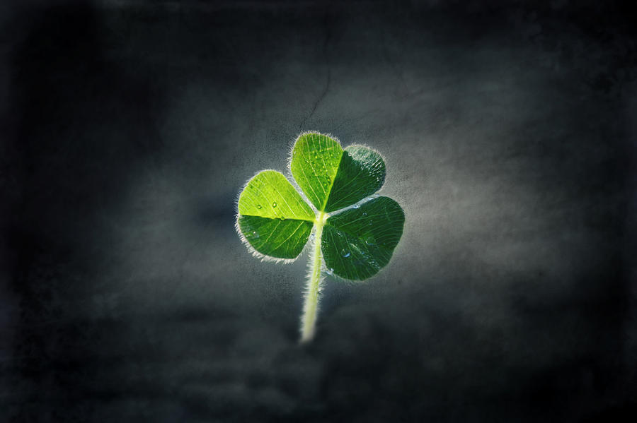 Green Photograph - Magical Clover by Melanie Lankford Photography
