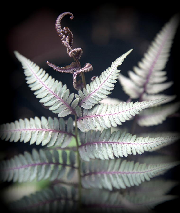 Ferns Photograph - Magical Forest 2 by Karen Wiles