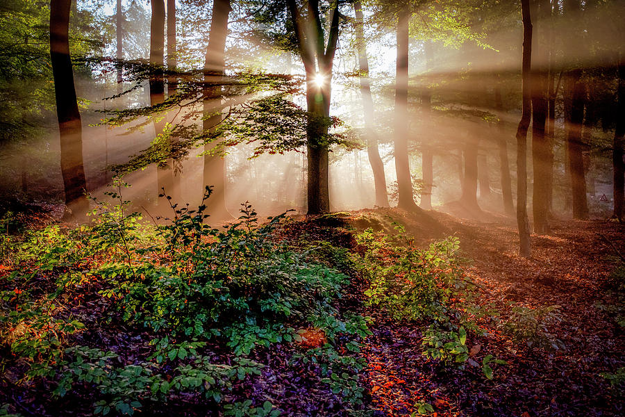 Rays Photograph - Magical Forest by Peter Bijsterveld