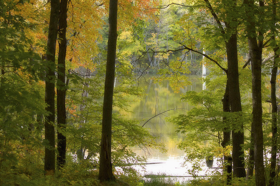 Maplewood State Park Photograph - Magical Maplewood by Penny Meyers