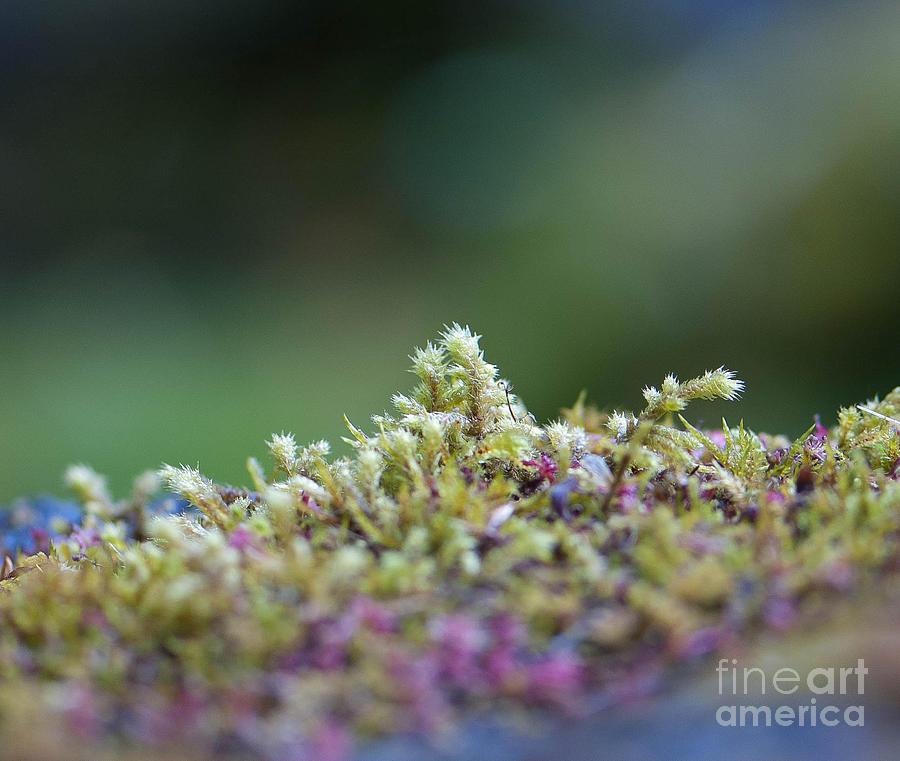 Closeup Photograph - Magical Moss by Sarah Crites