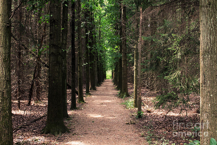 Magical Path Photograph