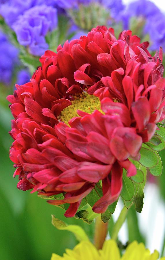 Dahlia Flower Photograph - Magical....... by Tanya Tanski