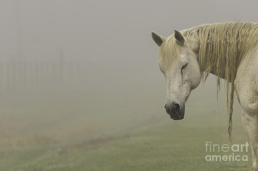 Nature Photograph - Magical White Horse by Cindy Bryant