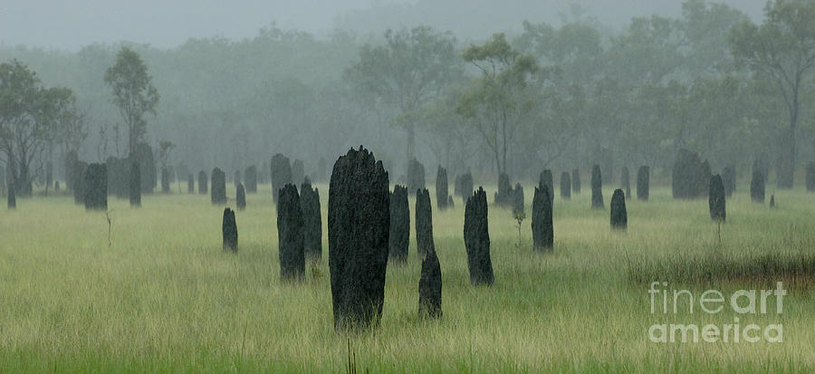 Termites Photograph - Magnetic Termite Mounds by Bob Christopher