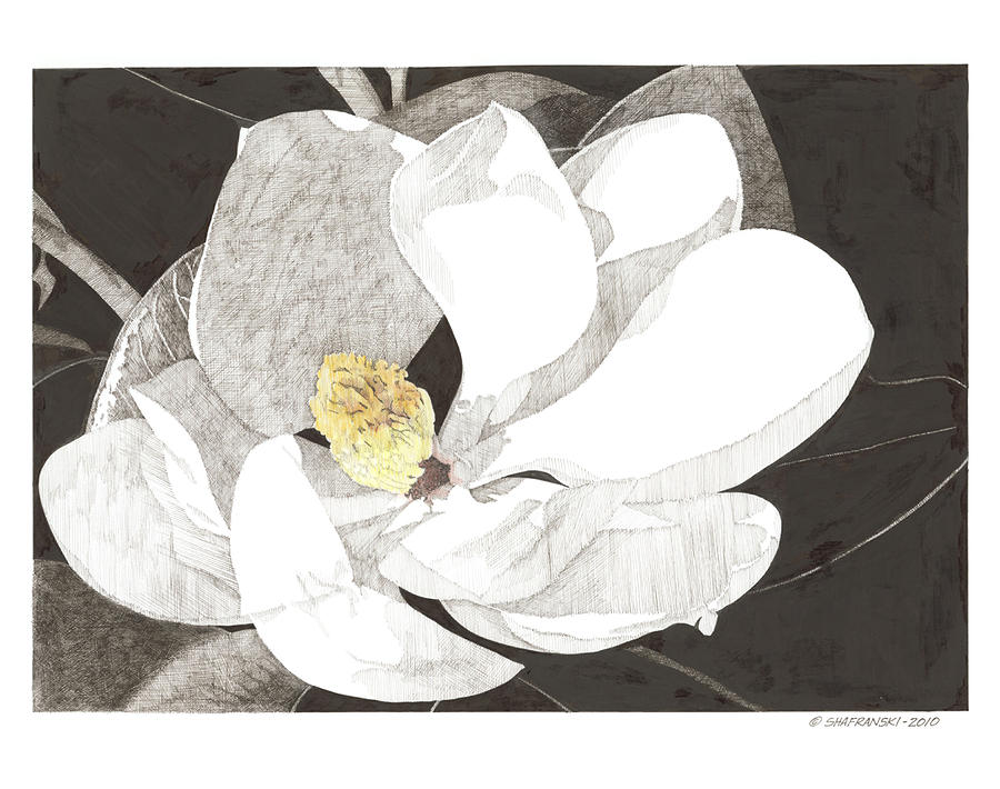 Pen And Ink Drawing - Magnolia 1 by Paul Shafranski