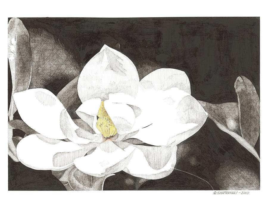 Pen And Ink Drawing - Magnolia 2 by Paul Shafranski
