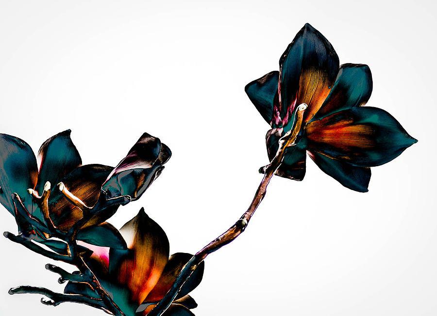 Magnolia Photograph - Magnolia by Alicia Romano