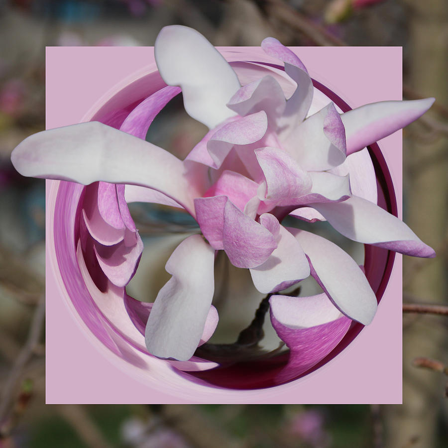 Magnolia Blossom Series 1302 by Jim Baker