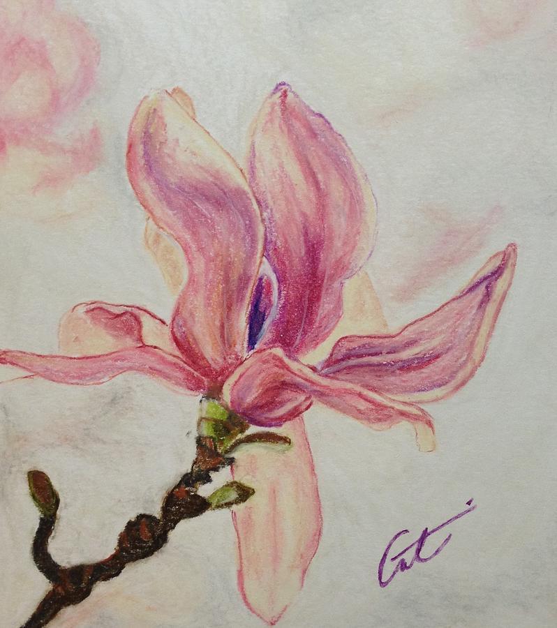 Magnolia Drawing - Magnolia by Cristel Mol-Dellepoort