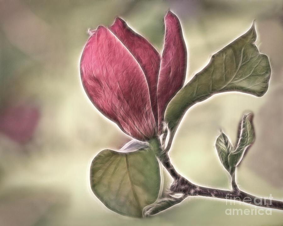 Magnolia Photograph - Magnolia Glow by Susan Candelario