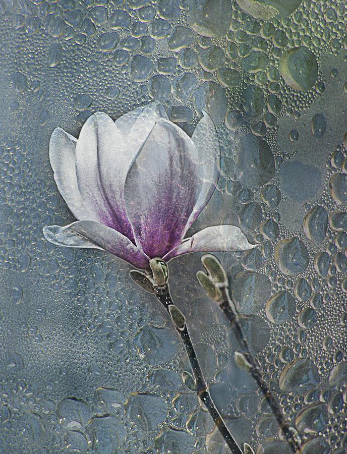 Magnolia Photograph - Magnolia by Joachim G Pinkawa